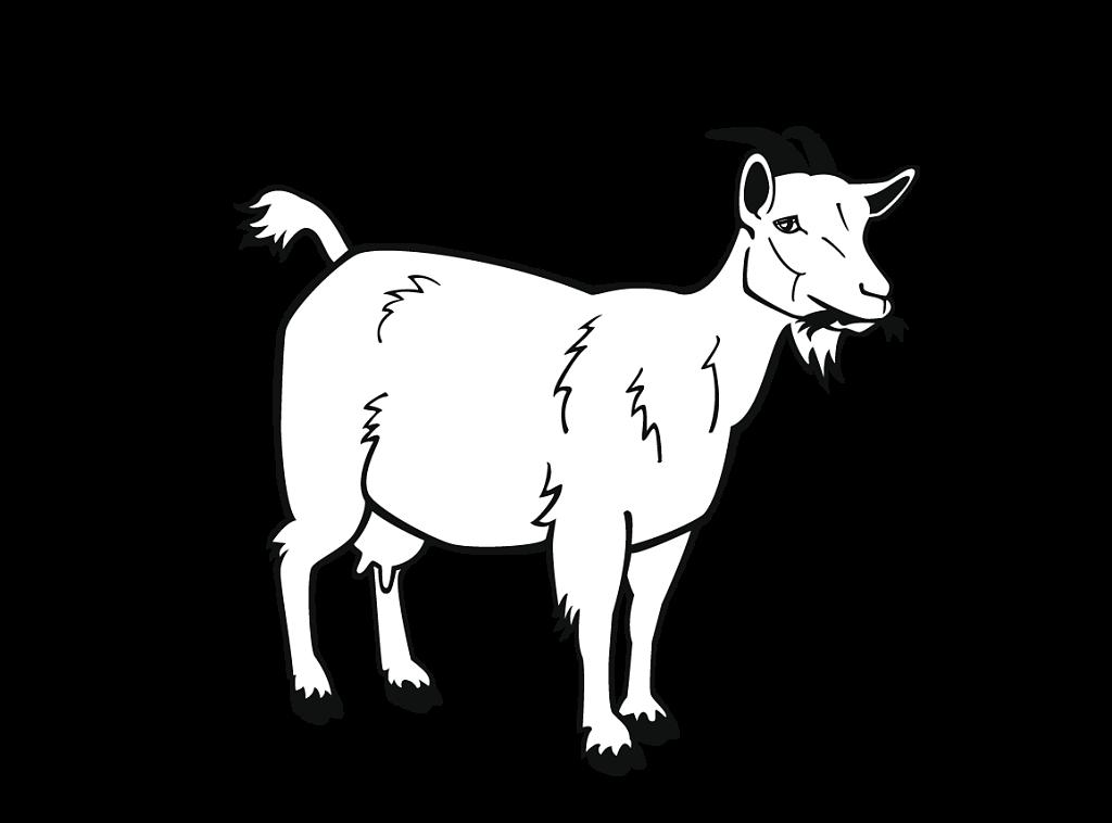 Nos fromages au lait de chèvre